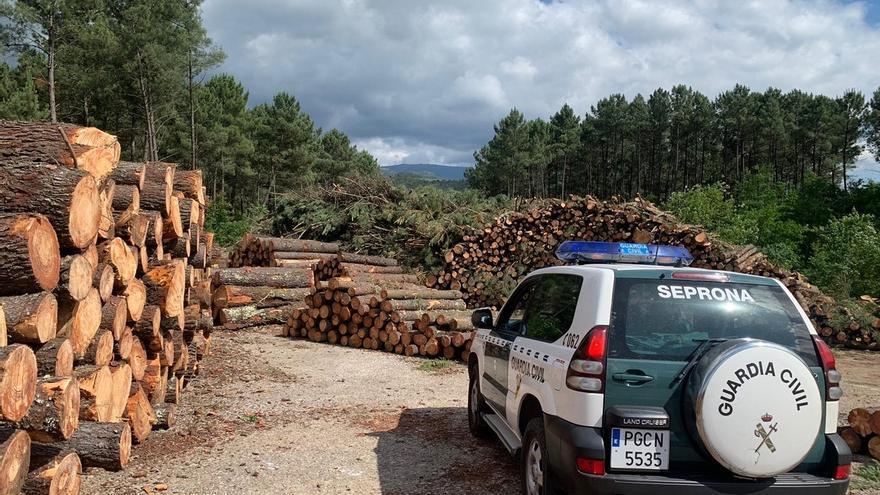 Un empresario de Ourense detenido y 14 personas investigadas por vender madera infectada en Cantabria y otras ccaa