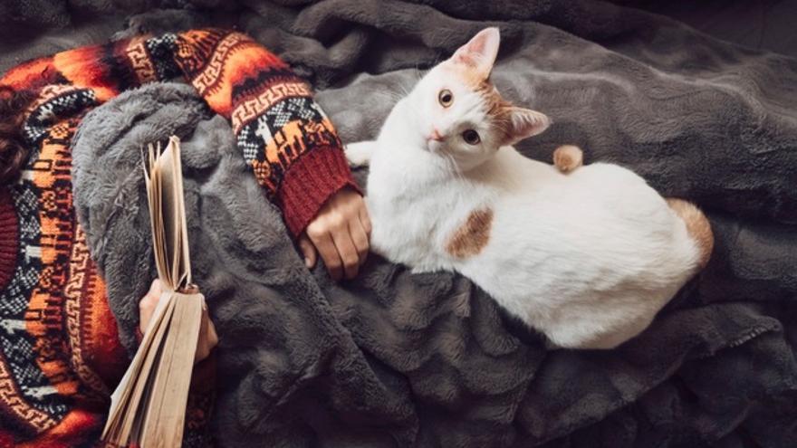 Por qué tu gato duerme encima de ti