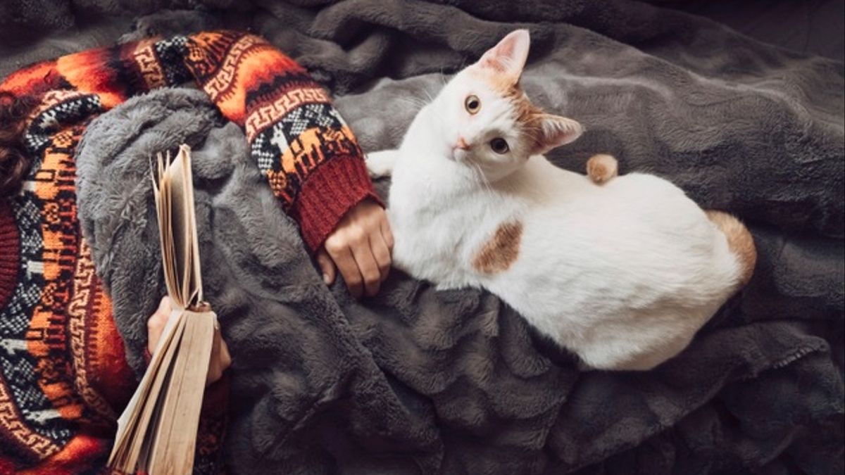 Gato compartiendo lecho con humanos.