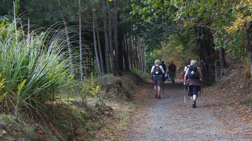 Corredoira arbolada en la etapa 30 del Camino de Santiago.