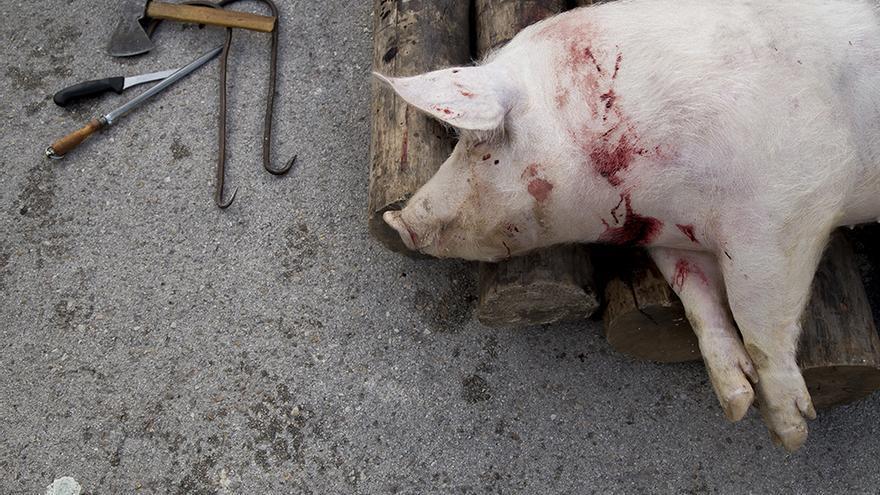 Matanza pública del cerdo en San Leonardo de Yagüe. Foto: Tras los Muros