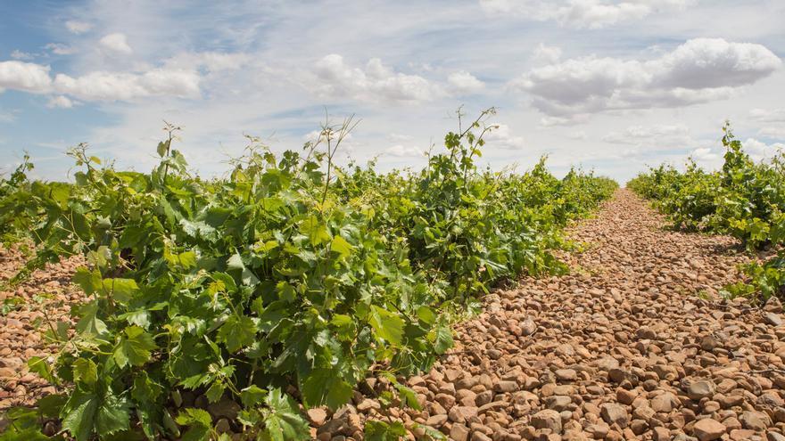 """Las organizaciones agrarias consideran """"inaceptable"""" el recorte propuesto para los fondos de la PAC"""