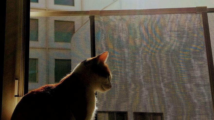 Vistas desde la ventana del piso interior de la autora de la carta | SOMOS MALASAÑA