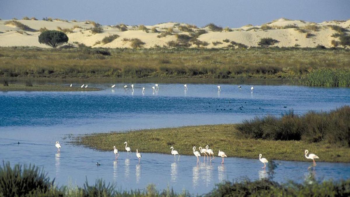 Flamencos en las marismas de Doñana