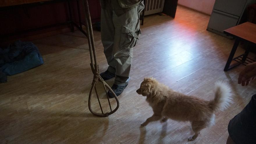 Artilugio con el que son capturados en Georgia los perros sin hogar. Tras el pánico y el dolor que les produce, son matados.