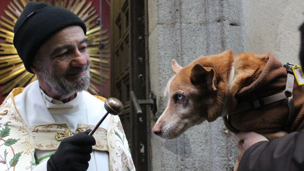 Bendición de animales en San Antón 2019 | SOMOS CHUECA