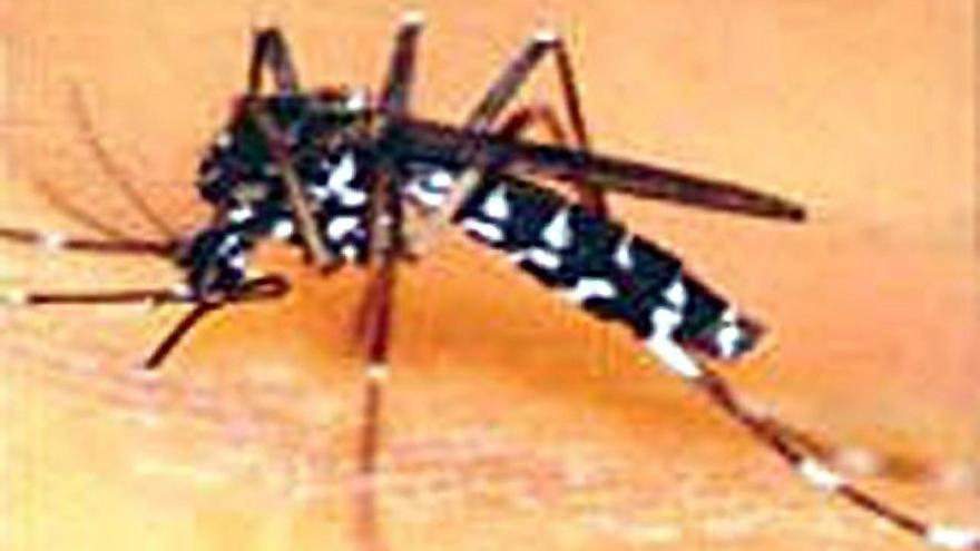 La Inteligencia Artificial ya identifica al mosquito tigre en fotografías