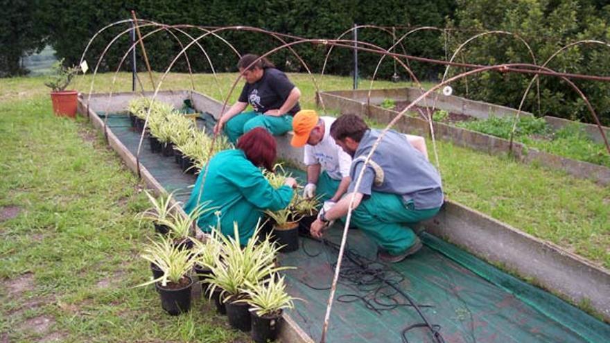Trabajadores del SERCA realizando tareas de producción de plantas.