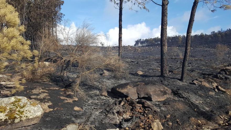 Efectos de otro incendio registrado la semana pasada en San Cristovo de Cea (Ourense)
