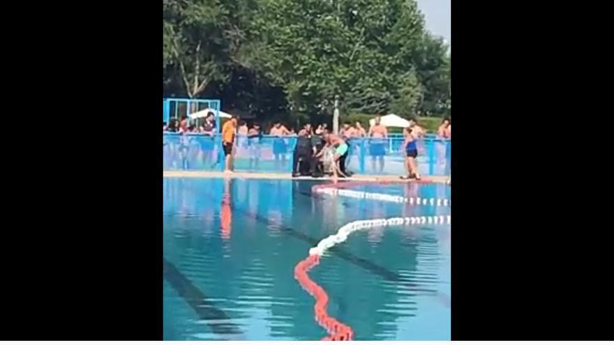 jabali en la piscina municipal de tomelloso