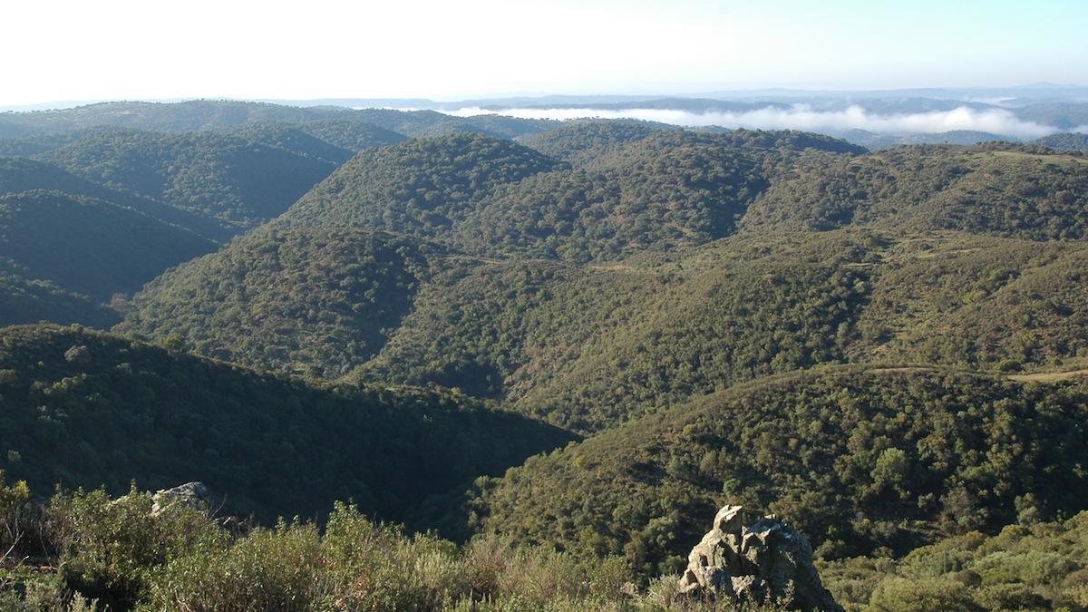 Las Aljabaras, en el Parque Natural Sierra de Hornachuelos.