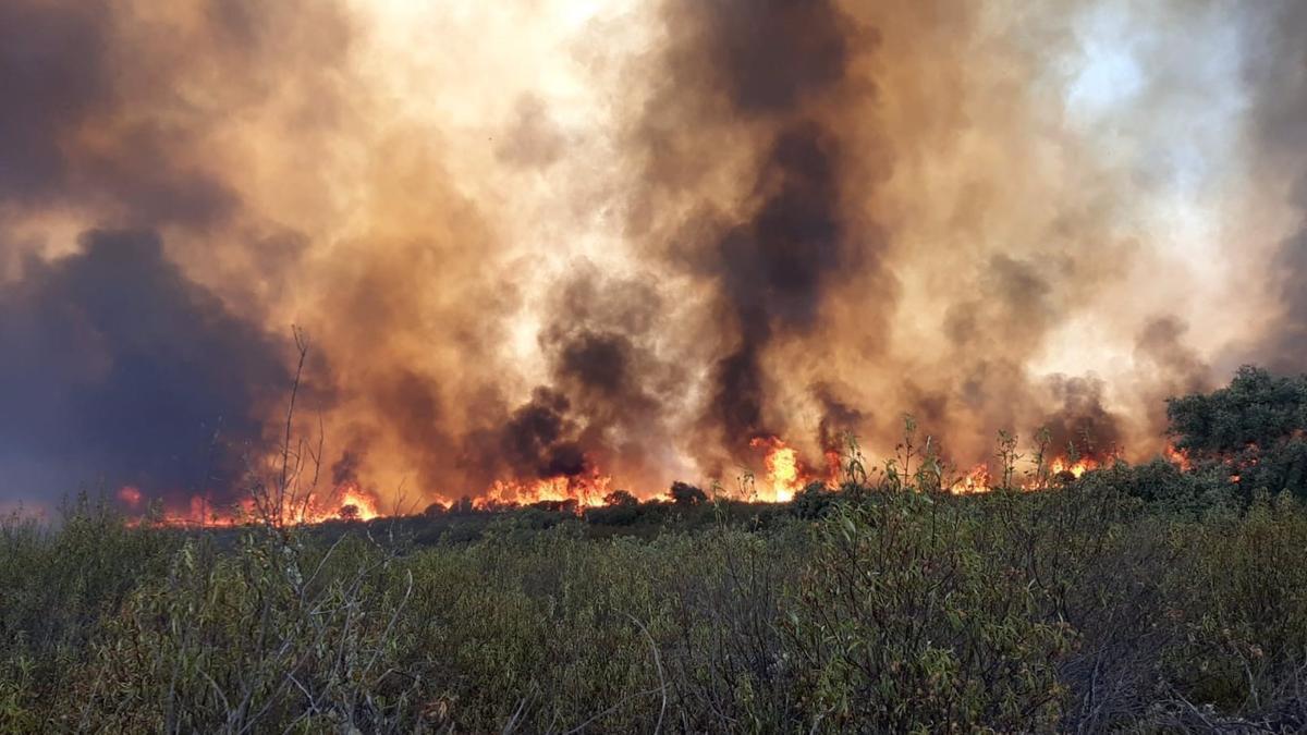 Incendio forestal en el Puerto del Calatraveño, término de Alcaracejos, en la provincia cordobesa.