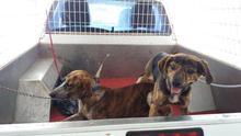 Perros abandonados en Famara.