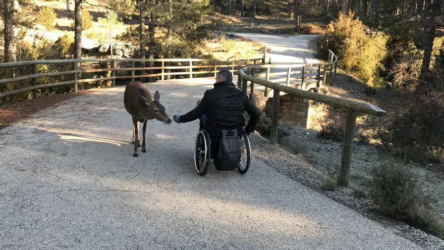 Un usuario en silla de ruedas acaricia a una cierva FOTO: www.clmturismoaccesible.com
