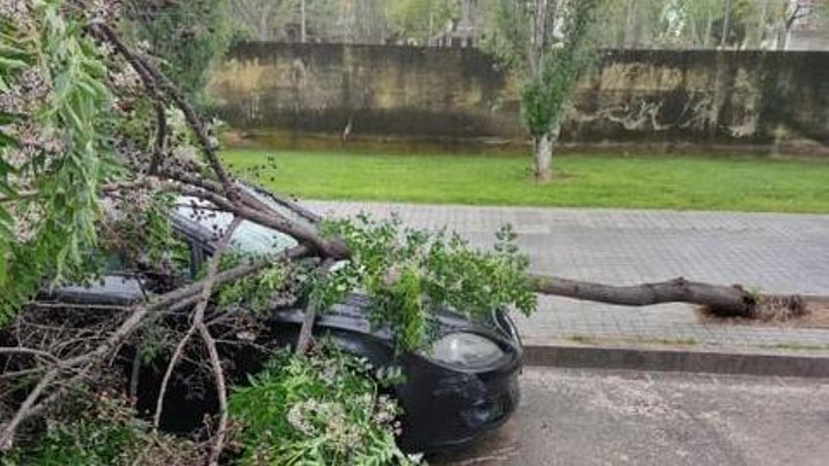 Árbol caído sobre un vehículo
