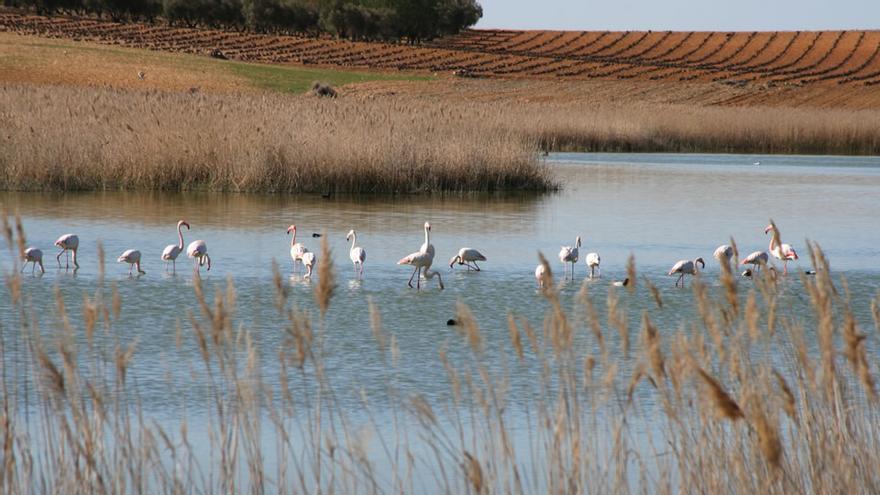 """Las organizaciones ambientales tachan el Pacto Regional del Agua como """"contradictorio"""" e """"inadecuado"""""""