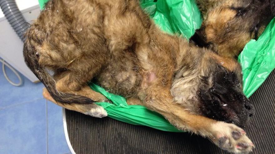 Dos de los cachorros encontrados muertos y en terribles condiciones en la perrera denunciada