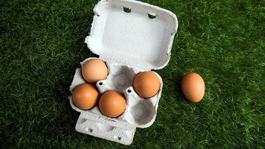 Detectan huevos contaminados con fipronil en otra granja de Corea del Sur