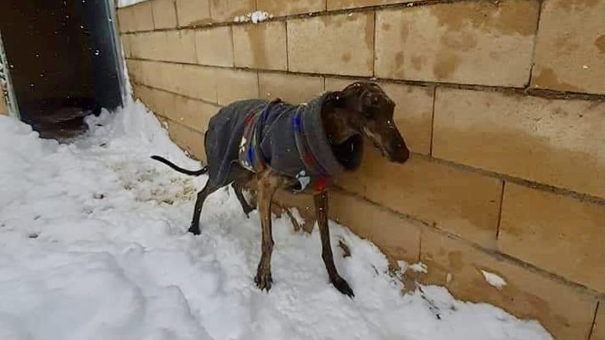 """Los animales también han sido víctimas de las políticas del """"sálvese quien pueda"""" ante el temporal Filomena"""