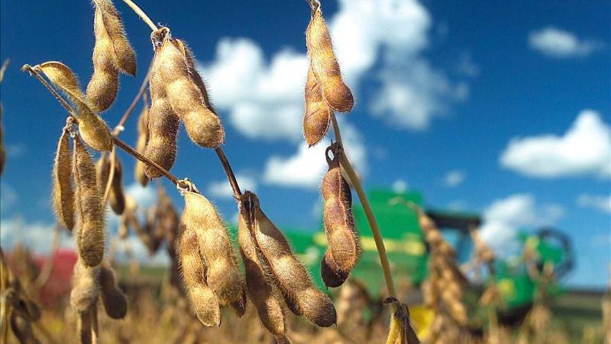 Cultivo de soja transgénica /Efe.