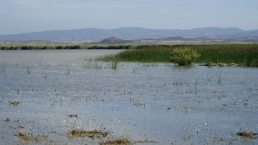 Designadas zonas especiales de conservación los humedales de Laguna de Pitillas, Balsa del Pulguer y Badina Escudera