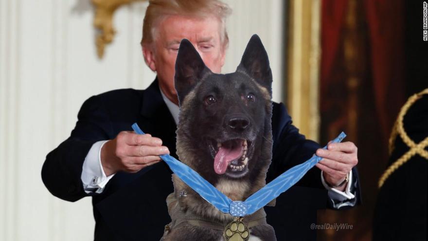 Trump condecora a la perra que participó en la operación para acabar con el líder del Estado Islámico.