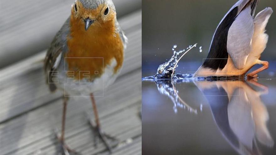 """SEO/Birdlife identifica a cada """"candidato"""" a la Presidencia con un ave"""