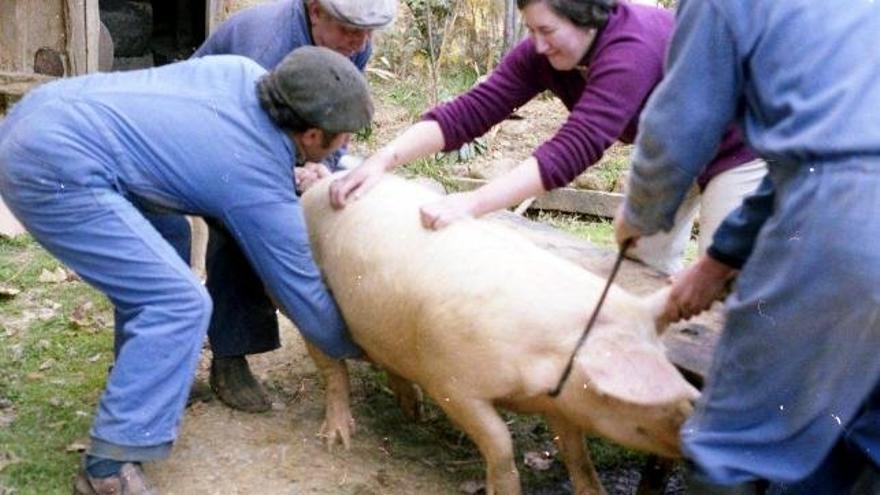 Matanza cerdo