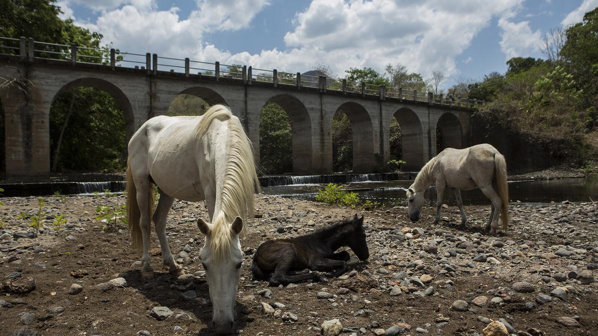 Extremadura ha detectado dos casos de carbunco en equinos. Imagen de archivo