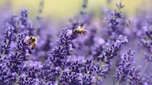 La cosecha de miel de Guadalajara caerá este año en más de un tercio debido a la sequía y al exceso de calor