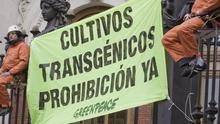 Activistas de Greenpeace en una de sus campañas en contra de los transgénicos