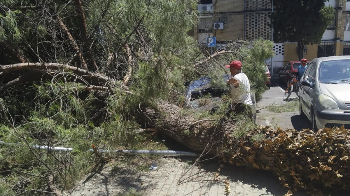 Caída de un árbol en la calle Algeciras