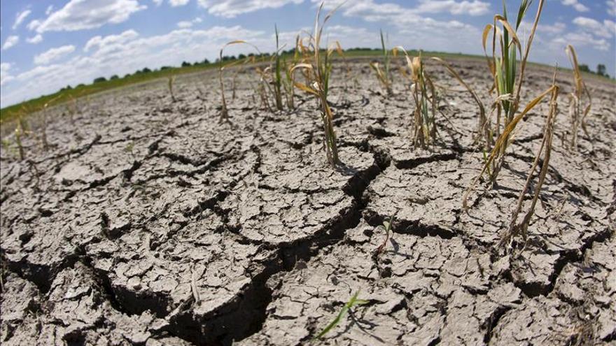 Sequía causará pérdidas agrícolas por 2.200 millones este año en California