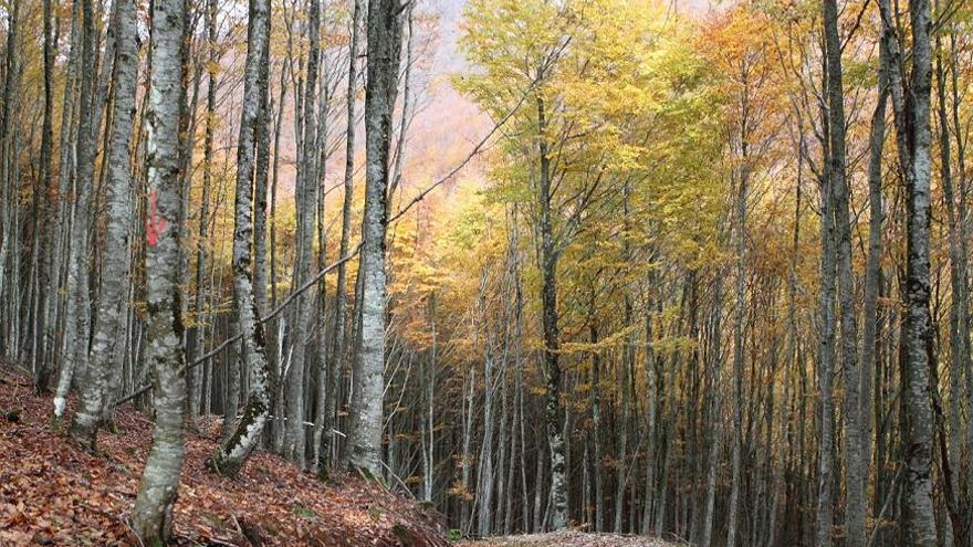 Una imagen del bosque de Zilbeti / Foto: Ramón Elosegui / SEO-Birdlife.