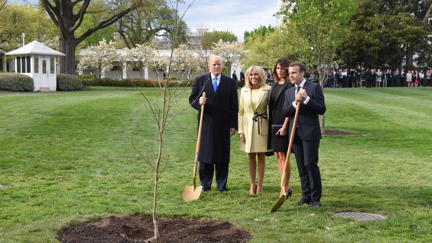 Los presidentes Trump y Macron plantan en la Casa Blanca el árbol que regaló el líder francés al estadounidense
