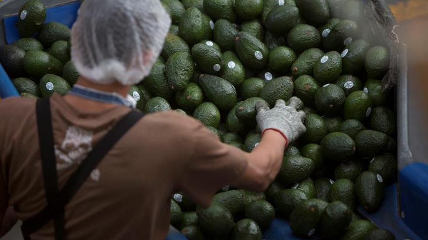 México acusa a Costa Rica ante la OMC de restringir las importaciones de aguacate
