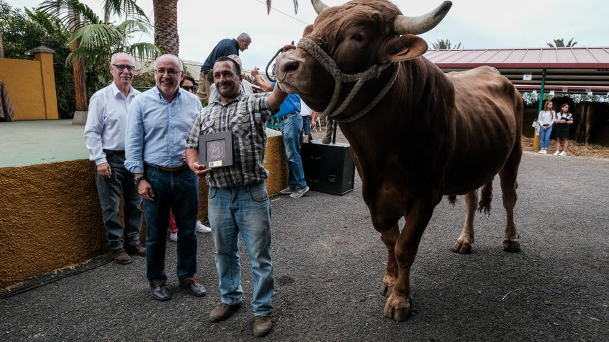 Primer premio al mejor toro del país