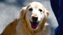 Cómo detectar si tu perro tiene cáncer