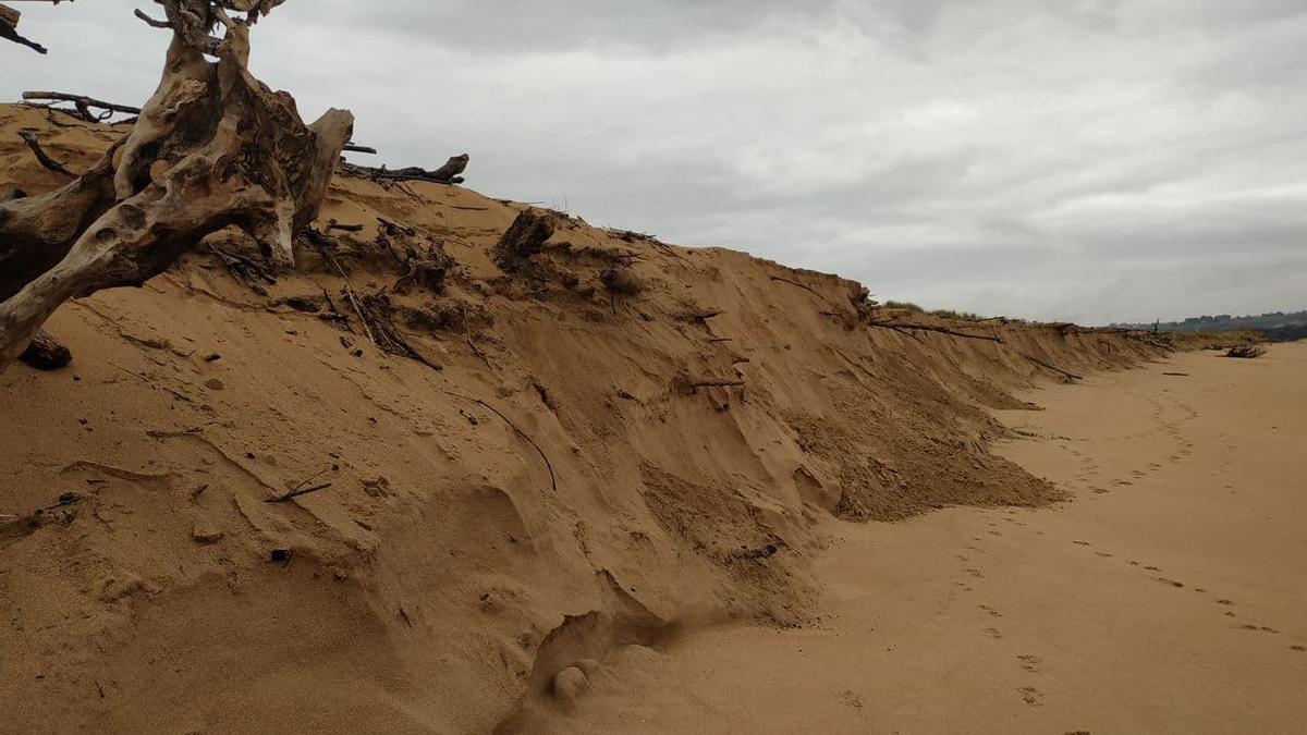 El último temporal se ha llevado dos metros de altura de playa y erosionado la duna.