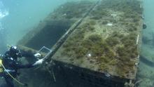 Un buzo recoge muestras en el arrecife artificial. / Bajoelagua Factory