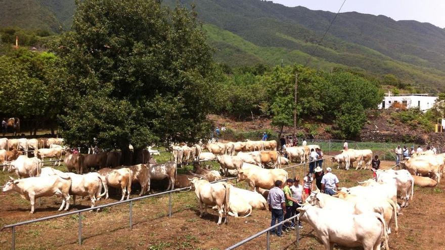 En la imagen ejmeplares en la feria de ganado este sábado: Foto: ÁNGEL ALONSO DE PAZ