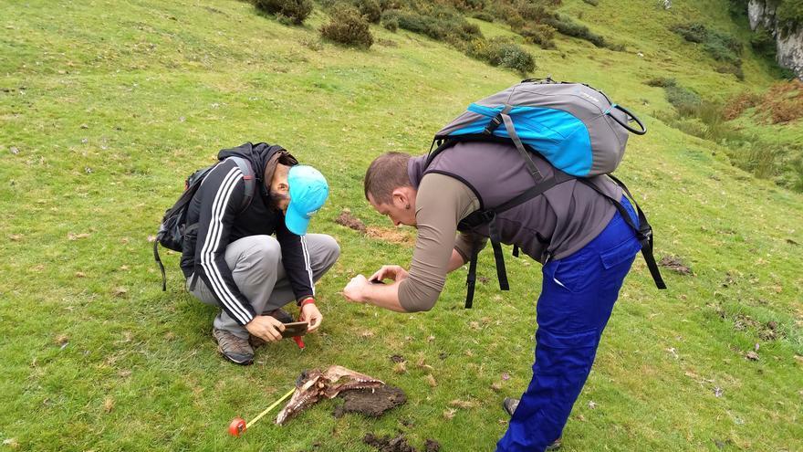 Trabajo de campo en Asturias para estudiar al lobo ibérico
