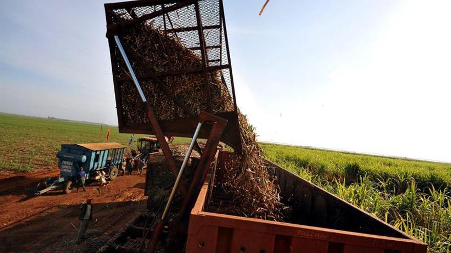 Cuba produce 4.200 toneladas de azúcar orgánico, el 60 por ciento del plan previsto