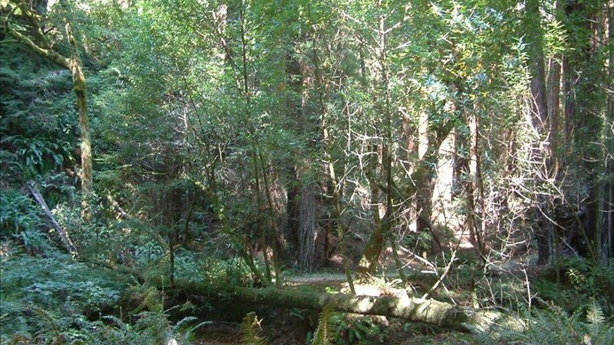 Los árboles dan más azúcar durante las sequías a las hormigas que los defienden