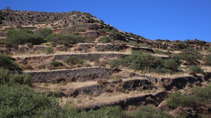 Cultivo en terrazas en Barranco Hondo (ALEJANDRO RAMOS)