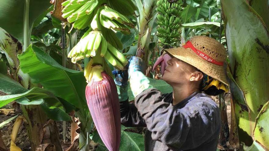 """Los pequeños productores independientes de Canarias accederán """"en condiciones más justas"""" a las ayudas económicas del POSEI"""