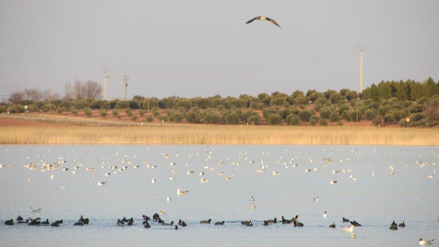 Lagunas de Villafranca de los Caballeros. / FOTO: Diego Jimeno Manrique.
