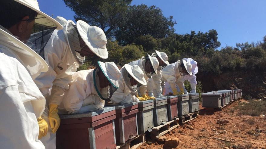 'Colmenas compartidas', el proyecto que quiere implicar al consumidor de miel en los problemas de la apicultura