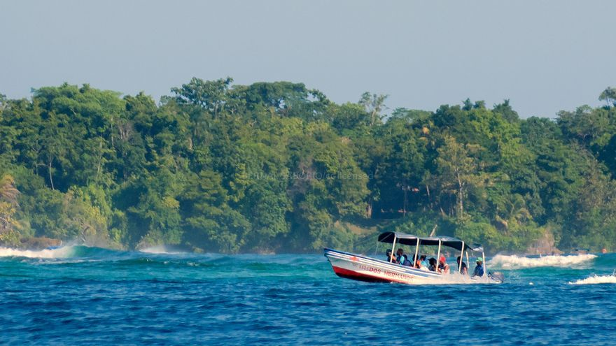 Un taxi acuático frente a los bosques de manglar. Bernal Saborio