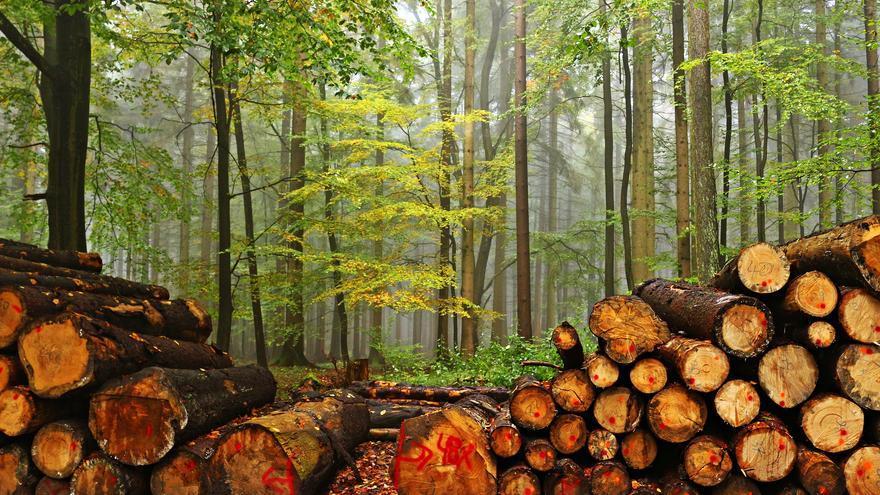 Talando el bosque para madera